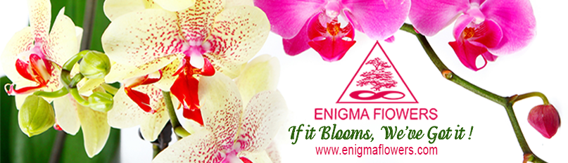 Enigma Flowers